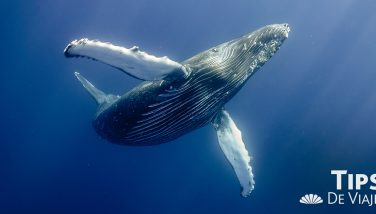 El fascinante espectáculo de ballenas en Puerto Vallarta